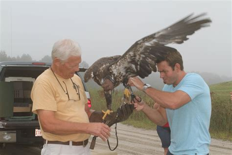 Raptors released at county landfill - News - The Daily
